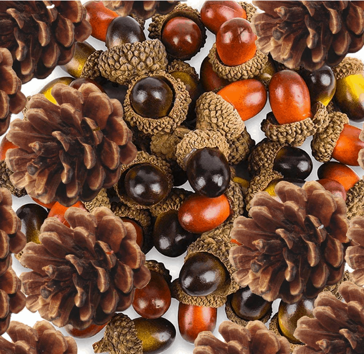 Acorns & Pine Cones